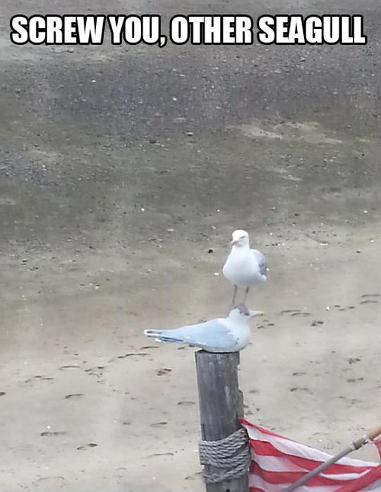 Seagulls Just Don't Care