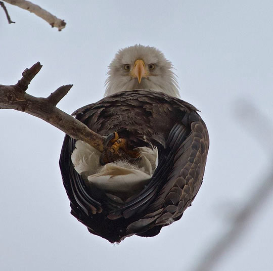 Under Eagle View