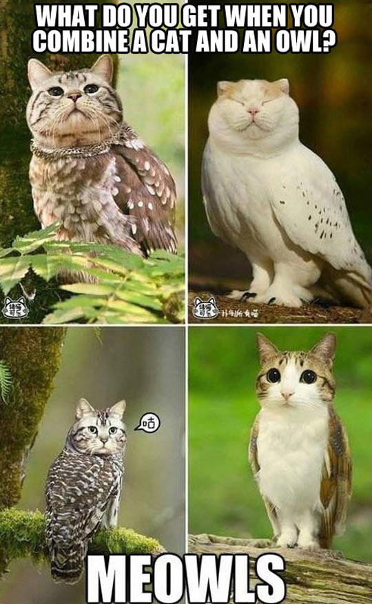 When Cats And Owls Combine