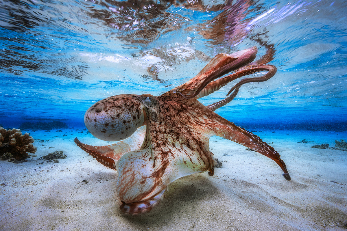 Winner of the 2017 Underwater Photographer of the Year Contest