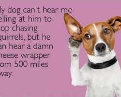 Selective Hearing Of A Dog