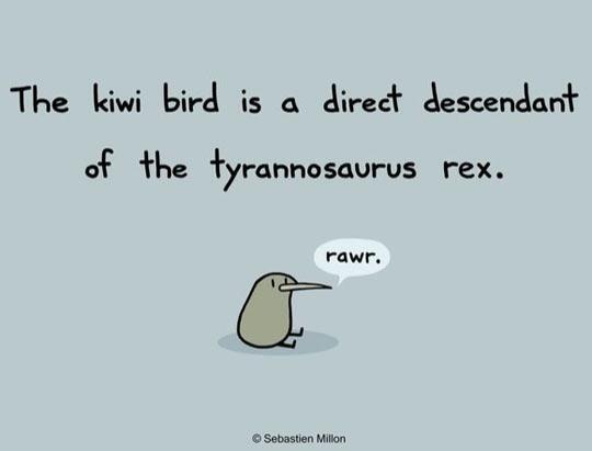 cool-kiwi-bird-trex-descendant