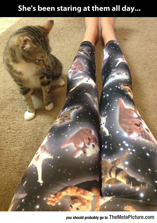 cool-leggings-cat-intrigued-space