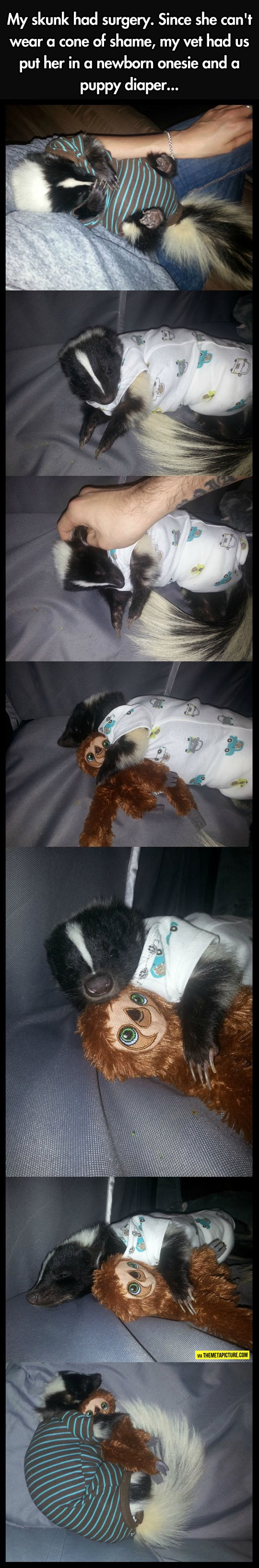 Skunk In A Puppy Diaper