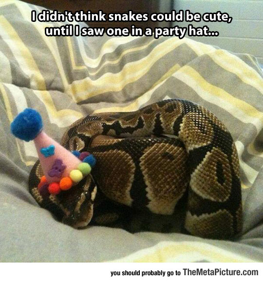 Snake Is Ready To Party