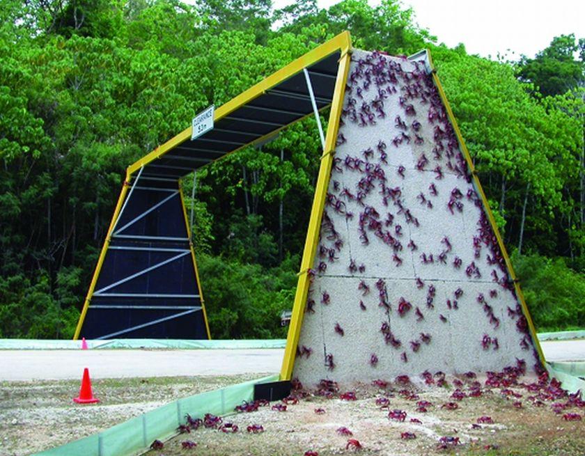 Bridge made for local crab population