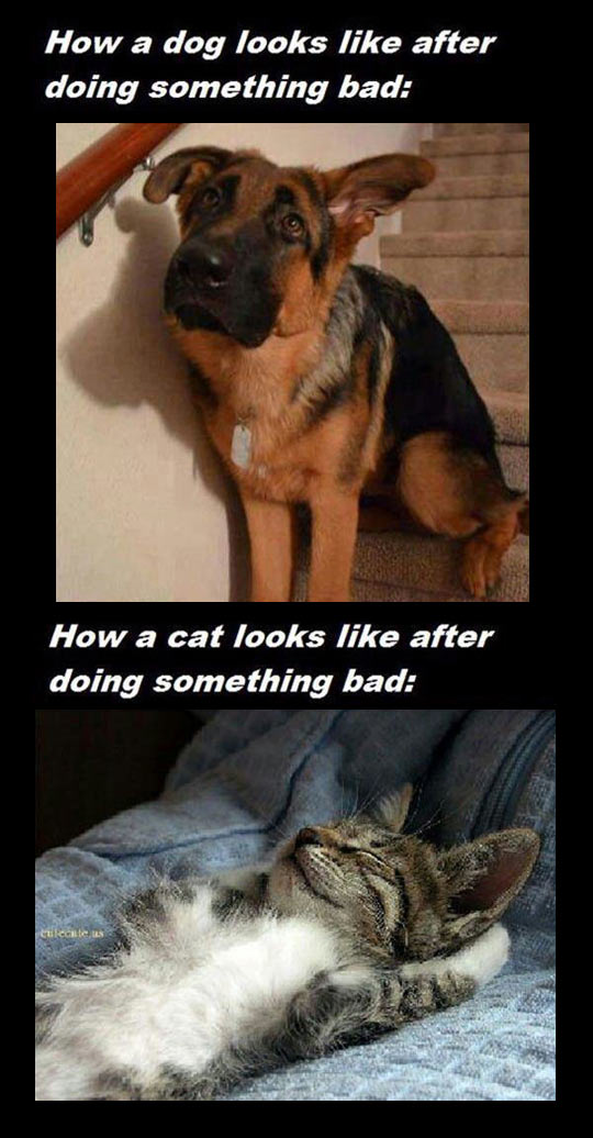 Clear Difference Between Dogs And Cats