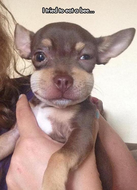 Puppy Had A Bad Idea