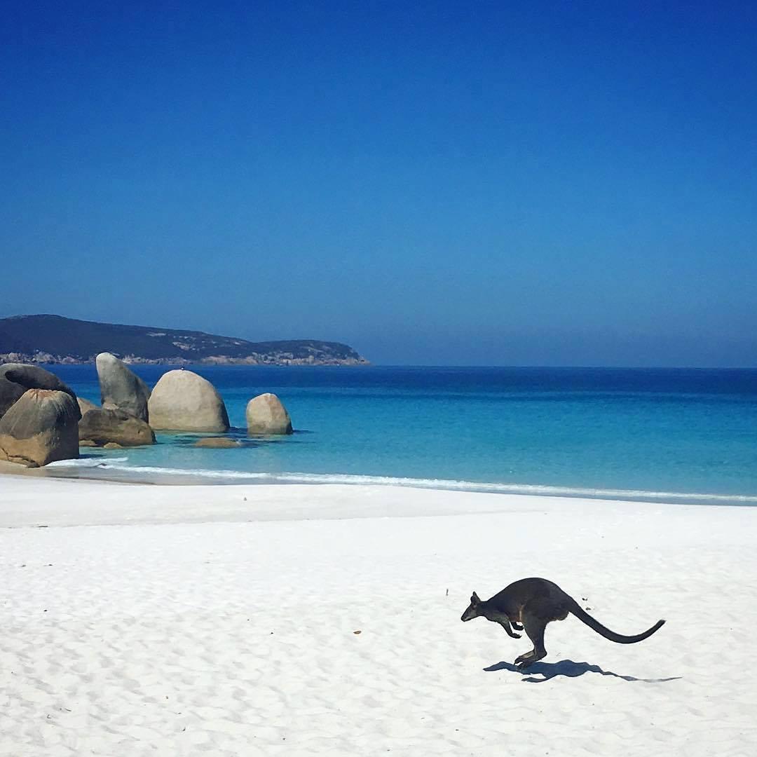 Quintessential Australia