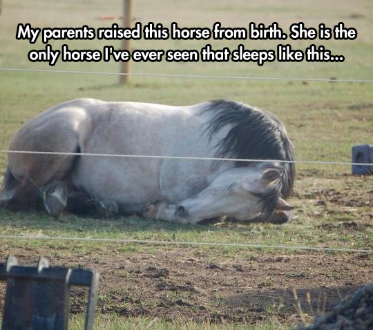 The Only Horse That Sleeps This Way