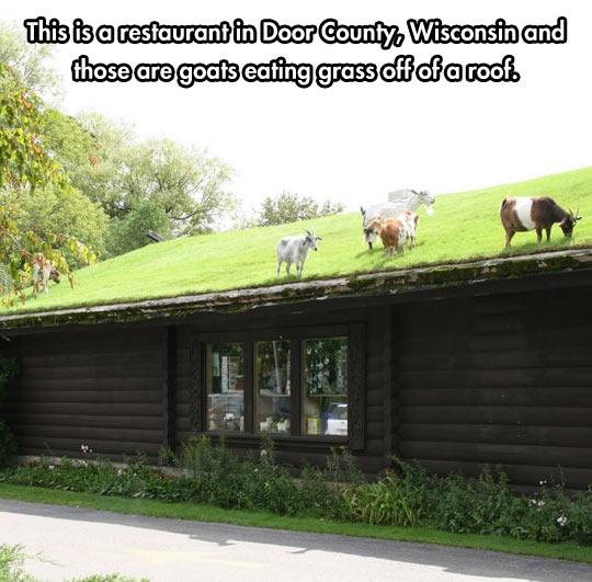 Wisconsin Restaurants