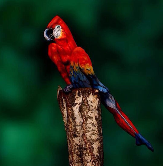 Woman Cleverly Painted To Look Like A Bird
