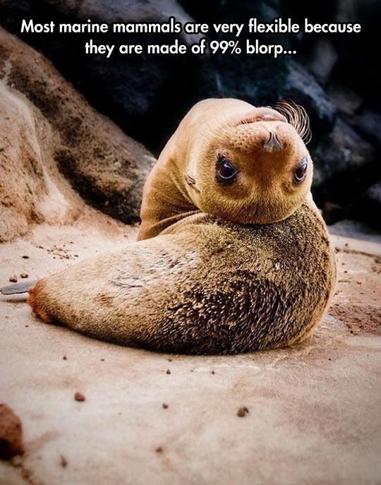Marine Mammals And Their Blorp