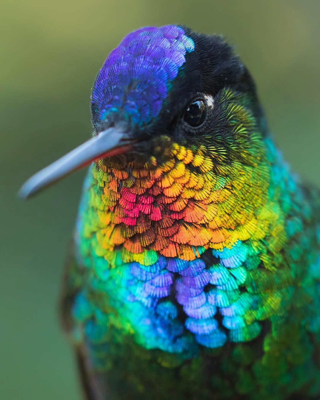 Amazing colors of this humming bird