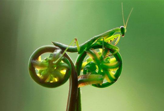 Mantis riding a vegetable bike