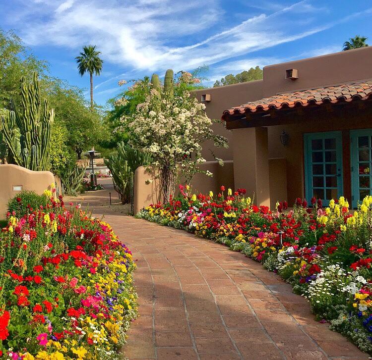 Scottsdale, Arizona in full bloom