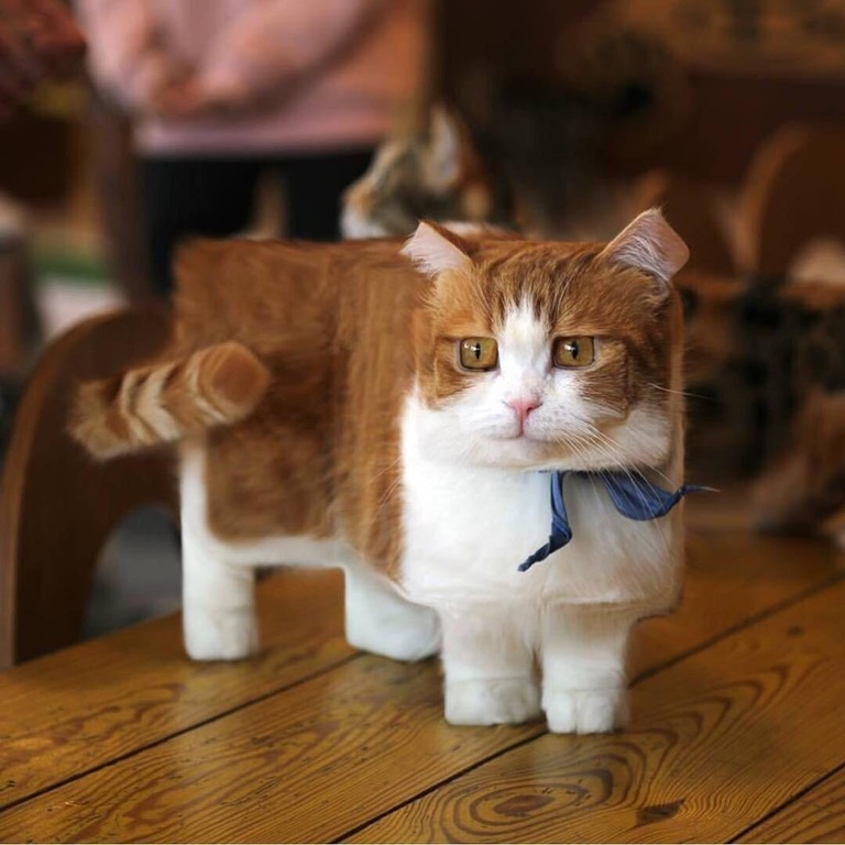 A minecrafted cat