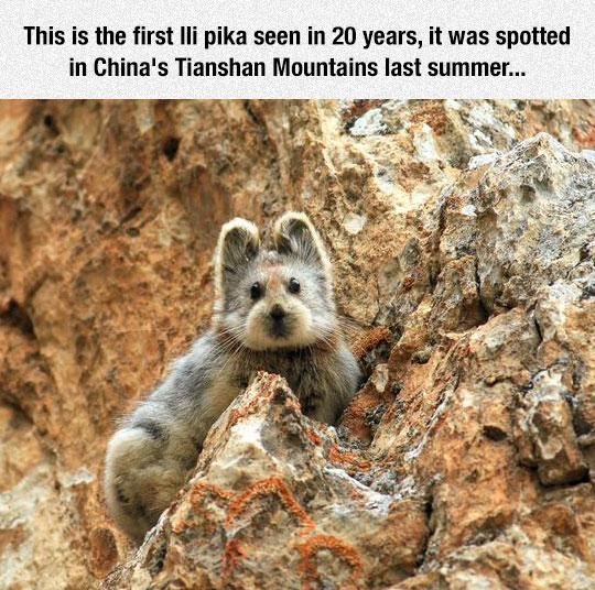 That Is A Fluffy Little Bugger