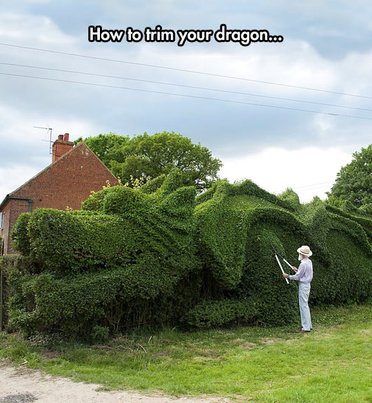 Trim Your Dragon