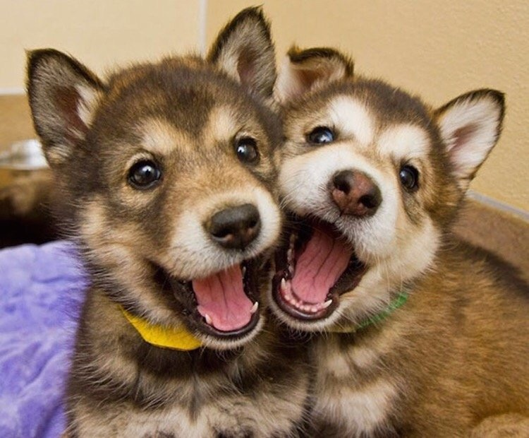 Two brothers are best friends!!!