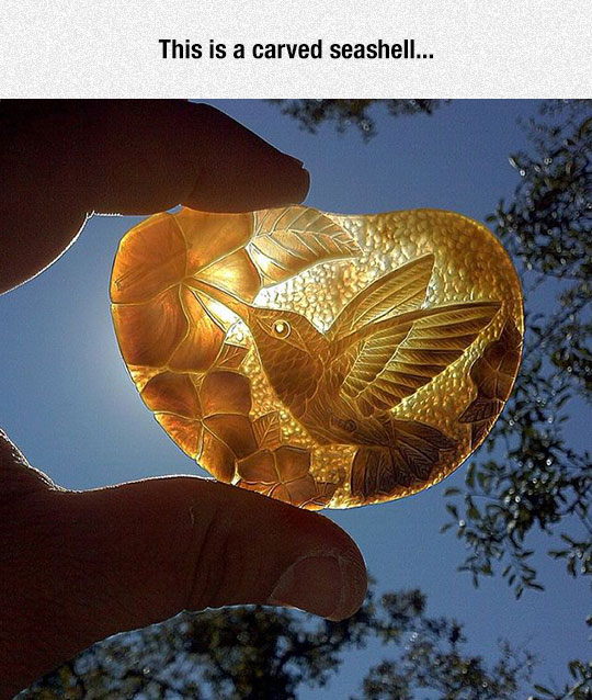 cool-carved-seashell-bird