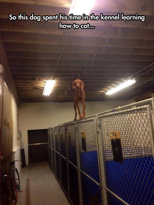 cool-dog-spent-kennel-learning-balance