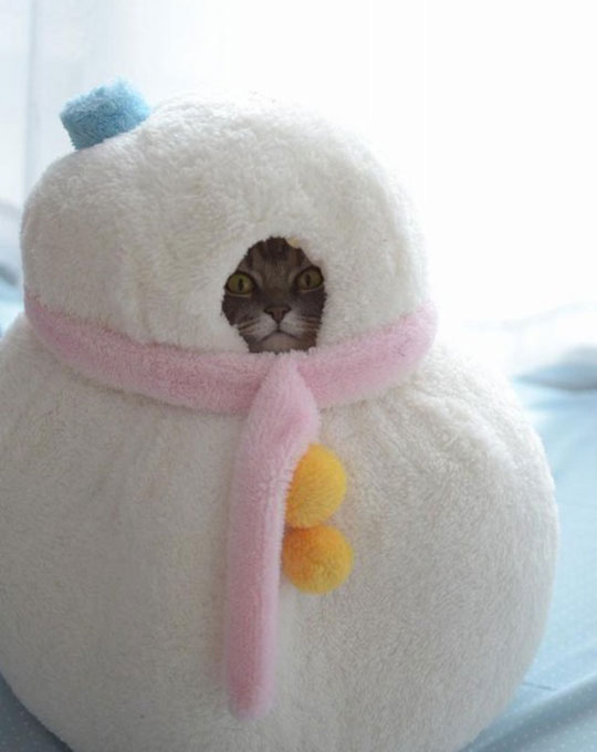 cool-snow-man-cat-stuffed-bed-winter