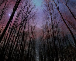 Nighttime Stroll Through The Woods