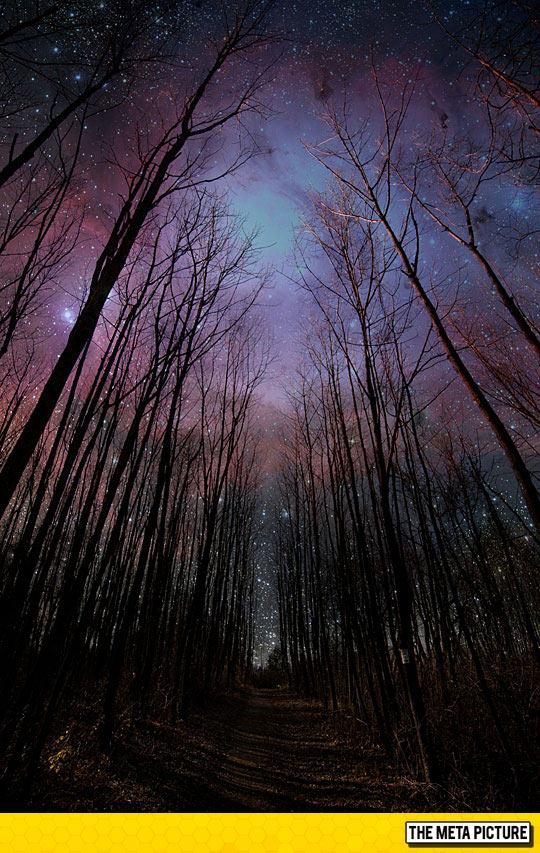 beautiful-night-sky-woods-stars-space