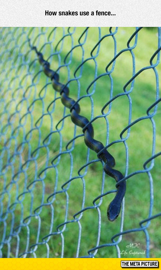 cool-snake-fence-body