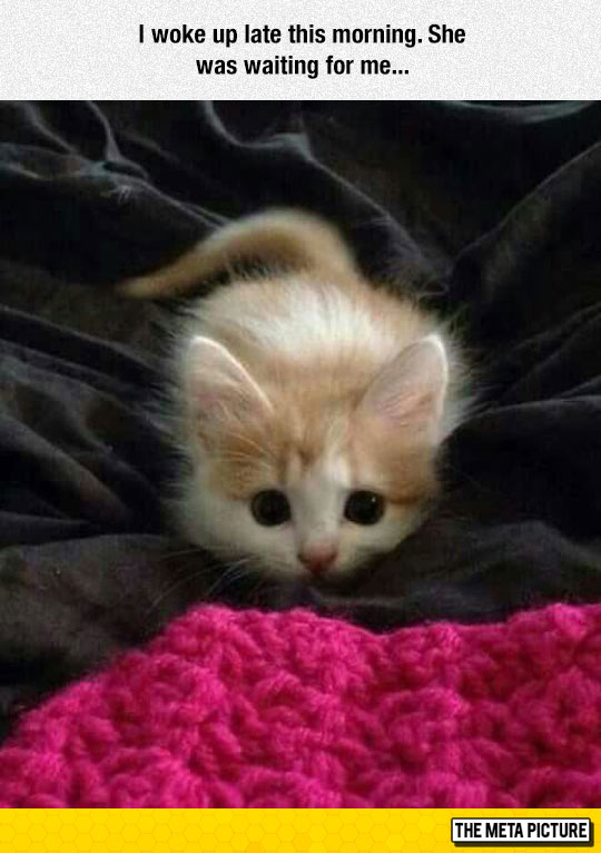 cute-cat-about-to-jump-kitten