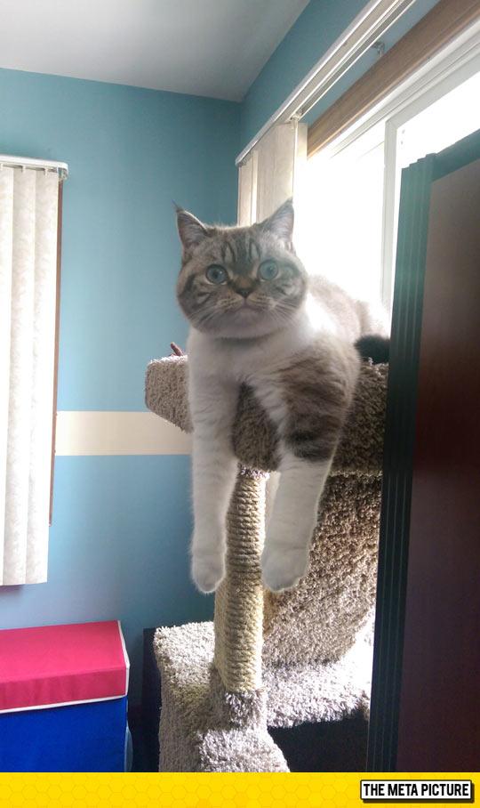 cute-cat-big-blue-eyes-fluffy