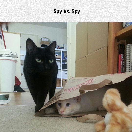 cute-cats-black-white-hidden