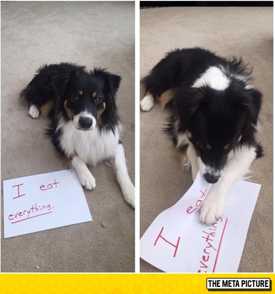 cute-dog-shaming-eating-sign