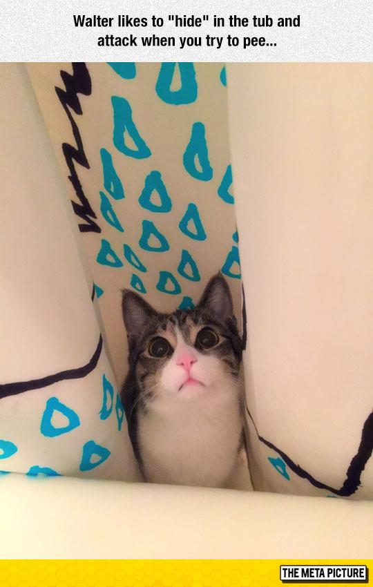 funny-cat-hidden-shower-attack