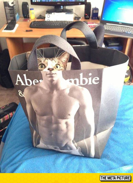 Abercrombie And Meow