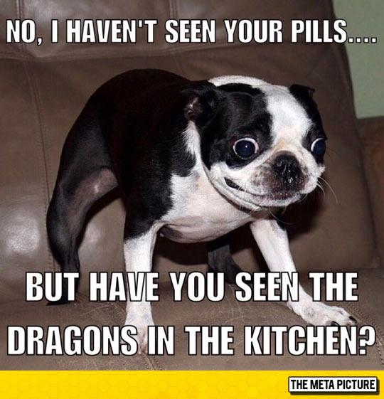 funny-dog-eyes-open-creepy-face