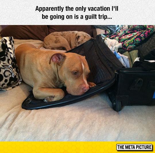 funny-dog-sad-sleeping-bed-suitcase