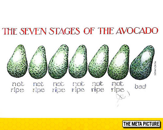 Seven Stages of Avocado