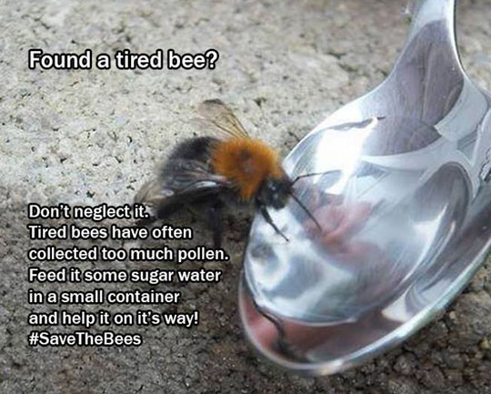 bee-rescue-spoon