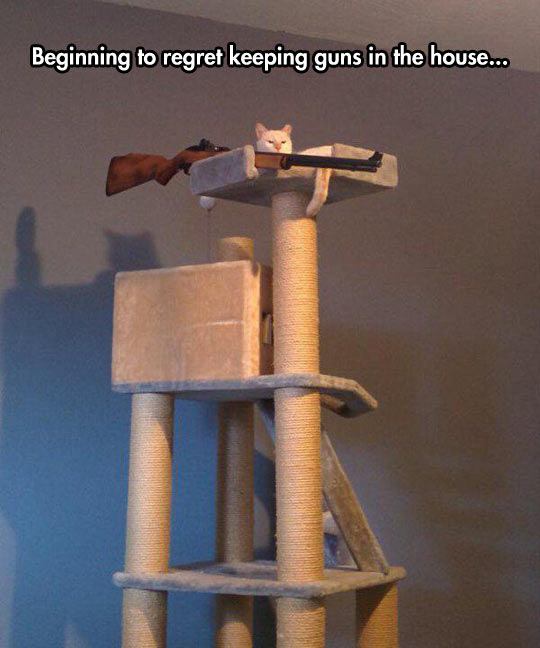 cool-cat-tower-weapon-waiting