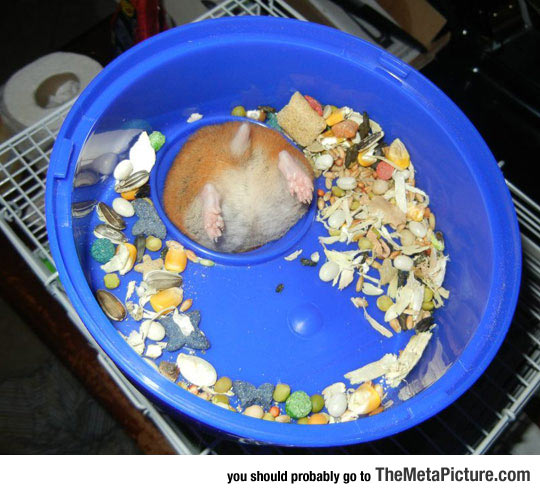 Hamster Problems