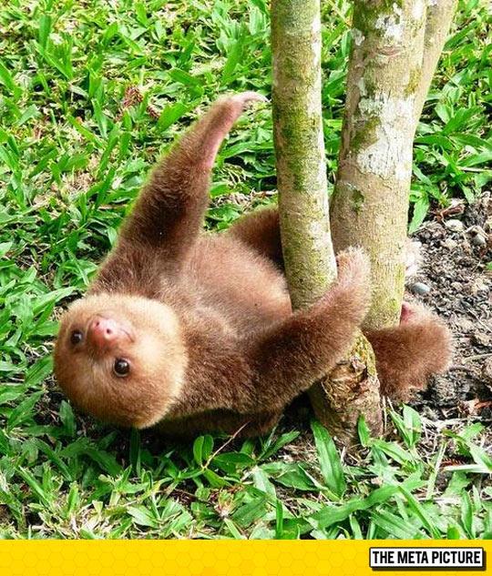 cute-baby-sloth-sleeping