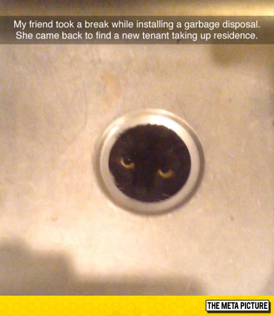 funny-cat-hidden-sink