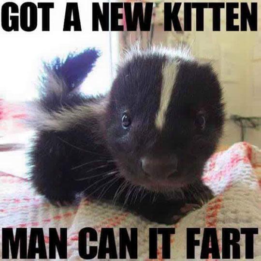 funny-kitten-baby-skunk