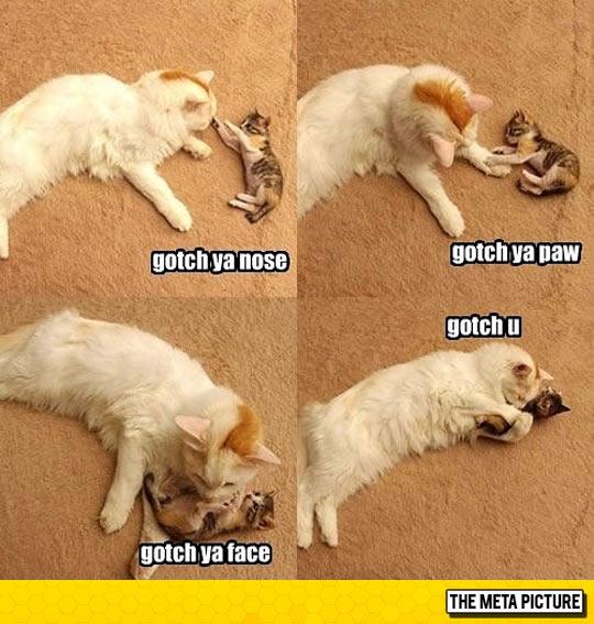 cool-cat-kitten-playing-paws