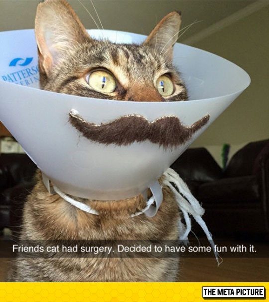 Epic Meowstach