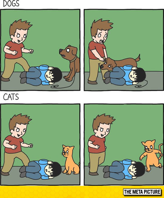 Dogs Vs. Cats, The Main Difference