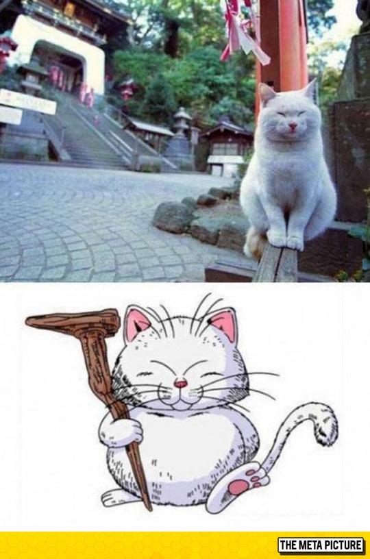 funny-white-cat-anime-look-alike