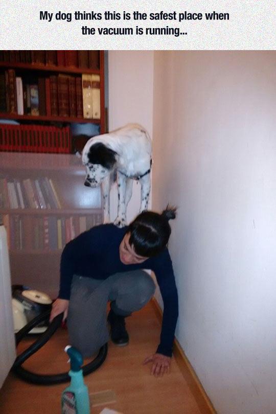 cool-girl-dog-vacuum-scared